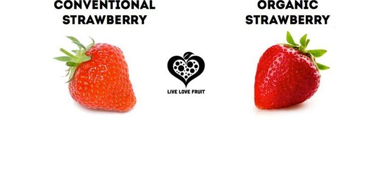 comida organica, fresas organicas